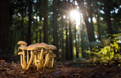 Když houbaření není jen lesní disciplína…